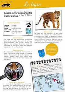 Classe En Ligne : rallye documentaires animaliers en ligne fran ais pinterest rallye lecture ~ Medecine-chirurgie-esthetiques.com Avis de Voitures