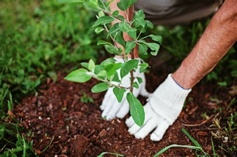 planting trees spring planting tips success for the season eagleson landscape co