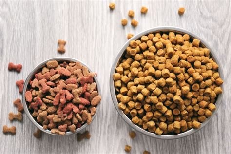 5 Best Dog Foods For Dogs With Sensitive Stomachs [2018