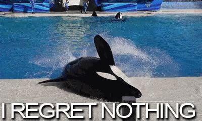 regret whale gif regret whale spinning discover