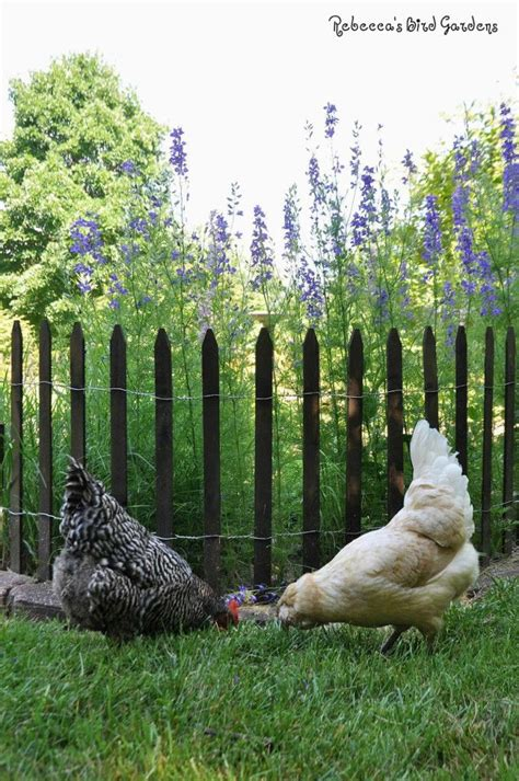 how to keep chickens out of garden 17 best ideas about picket fence garden on