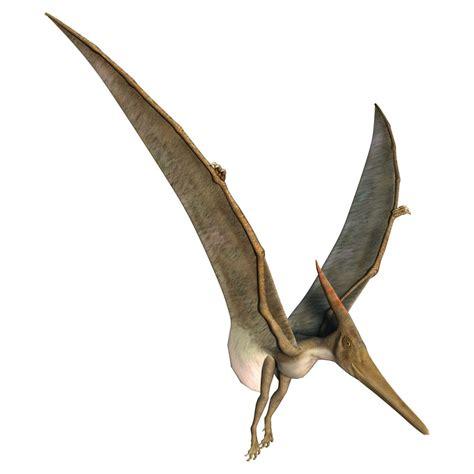 Rettili Volanti Preistorici Pterod 225 Ctilo Pterossauros Infoescola