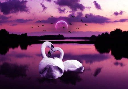 swan love birds animals background wallpapers