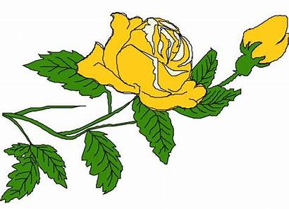 Yellow Rose Clipart Clip Roses Single Clipartmag