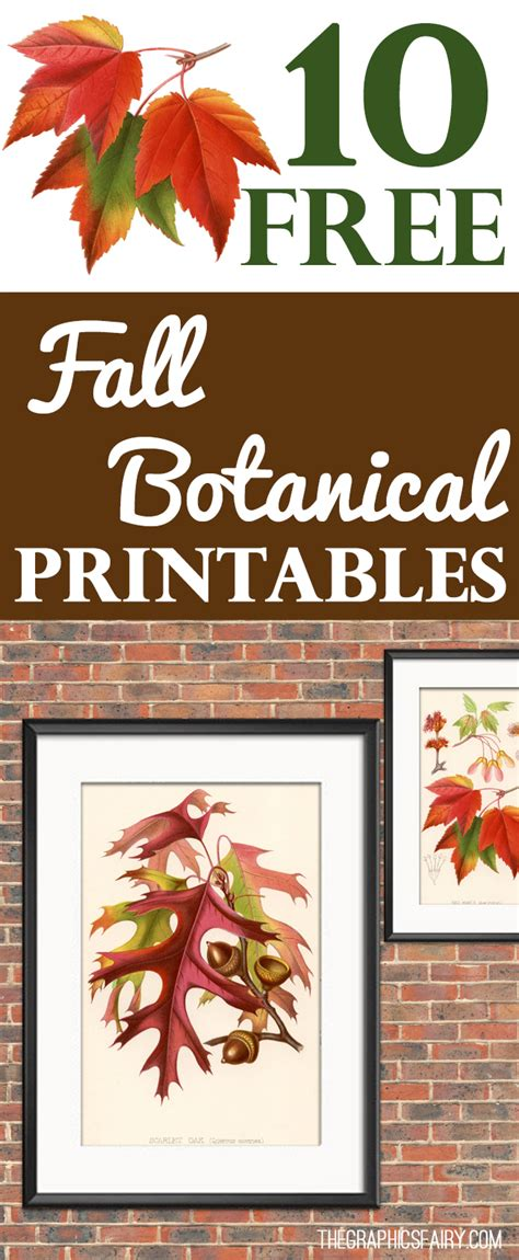 10+ Vintage Free Fall Botanical Printables!  The Graphics Fairy