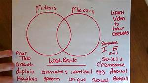 Recap Mitosis Vs Meiosis Please Correct Your Work And