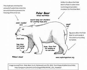 rowbottome-polarbear - home