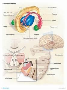 Psychiatry - Medical Illustration