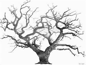 Art Works: Tree Drawings