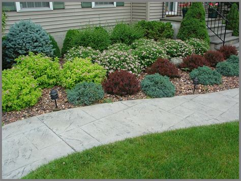 hedge ideas for landscaping house foundation shrub plantings of barberry spirea blue spruce and boxwood make up this