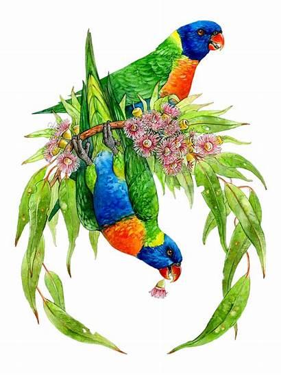 Rainbow Lorikeet Bird Australian Painting Watercolor Drawings