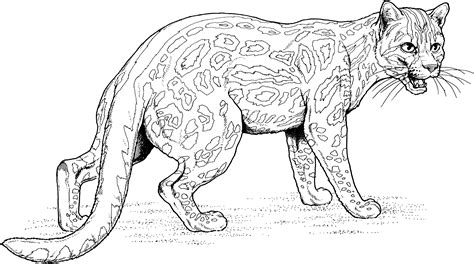 Coloring Jaguar by Jaguar Coloring Pages To And Print For Free