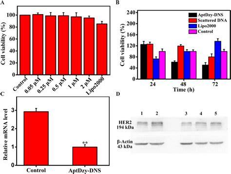 Cell cytotoxicity assay and proliferation assay. (A) CCK-8 ...
