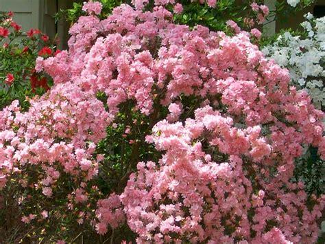 """""""beautiful Spring Flowers Blooming In Georgia"""" (by"""