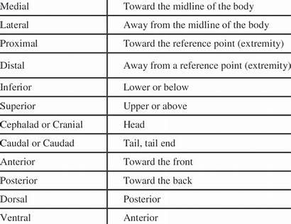 Anatomical Terms Anatomy Directions Direction Referenced Texts