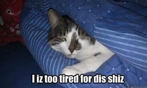 SLEEPY CAT MEMES image memes at relatably.com