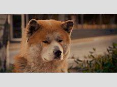 ¡Comprobado! Los perros pueden detectar a una mala persona