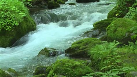 Animated River Wallpaper - river flow live wallpaper free android live wallpaper