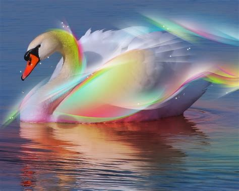 fantasy images rainbow swan hd wallpaper  background