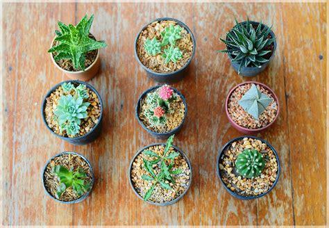 Cactus: การขยายพันธุ์ Cactus