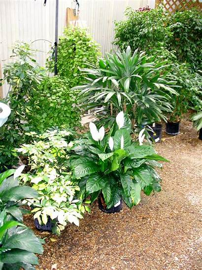 Tropical Plants Winter Growing Shelter Potted Inside