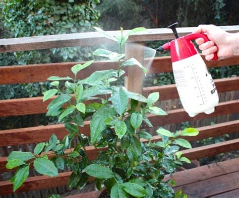 hausmittel gegen mäuse hausmittel gegen blattl 228 use 4 erprobte mittel dagegen