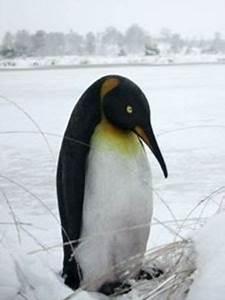Pingouin Sur La Banquise : pingouin statues banquise polaire ~ Melissatoandfro.com Idées de Décoration