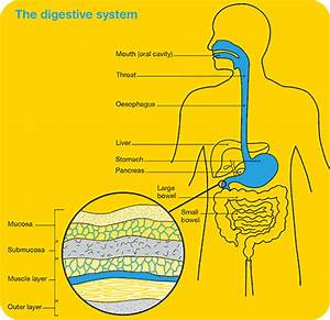 Stomach  U0026 Oesophageal Cancer