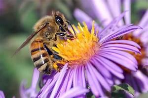 Welche Gartenmöbel Sind Die Besten : bienenweide welche sind die besten pflanzen f r flei ige bienchen ~ Whattoseeinmadrid.com Haus und Dekorationen