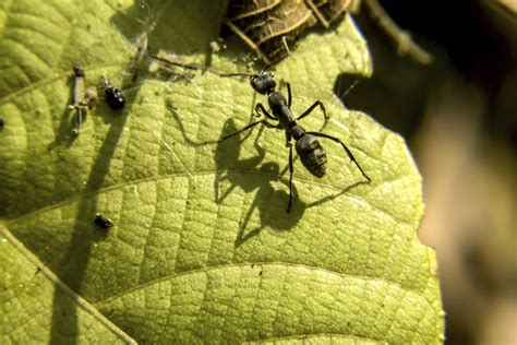 Mittel Gegen Ameisen Ganz Ohne Chemikalien Gartennews