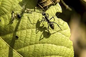 Ameisen Im Garten : mittel gegen ameisen ganz ohne chemikalien garten news garten ~ Frokenaadalensverden.com Haus und Dekorationen