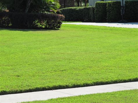 Tampa Zoysia Grass Care And Maintenance