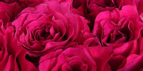 Nopirkt līdzjūtības ziedu pušķi Rīgā. Līdzjūtības puķu ...