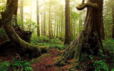 landscape forest desktop wallpaper 25723 baltana