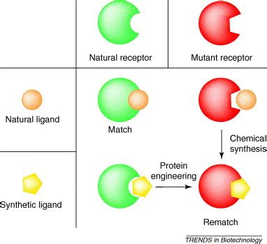 Creating new specific ligand-receptor pairs for transgene ...