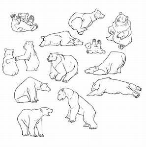 Bear Outline - Clipartion.com