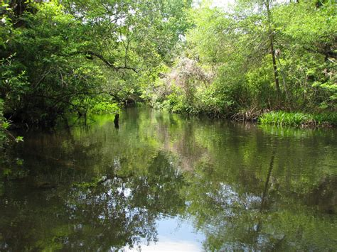 Juniper-Springs-Canoe-Run-Ocala-National-Forest-FL-041