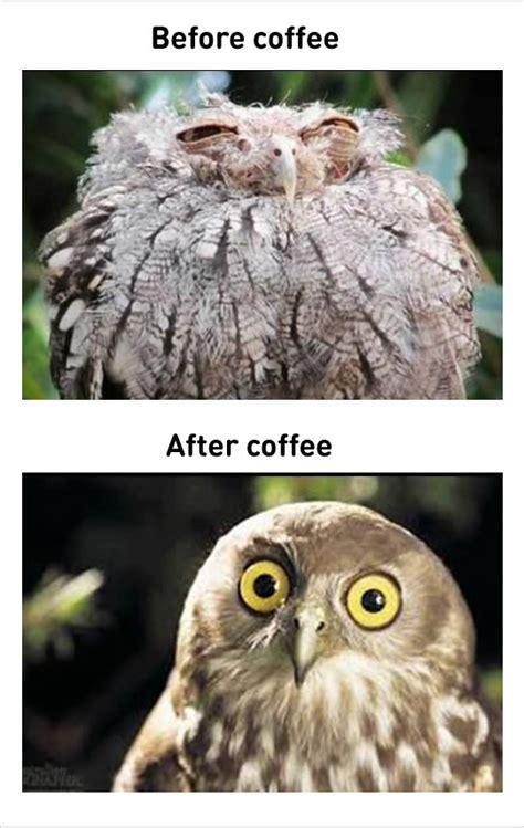Funny Coffee Work Meme