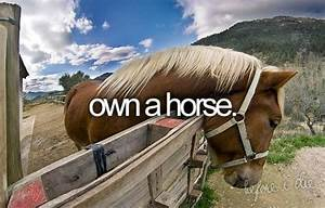 Owning A Horse ... Horse Owning Quotes