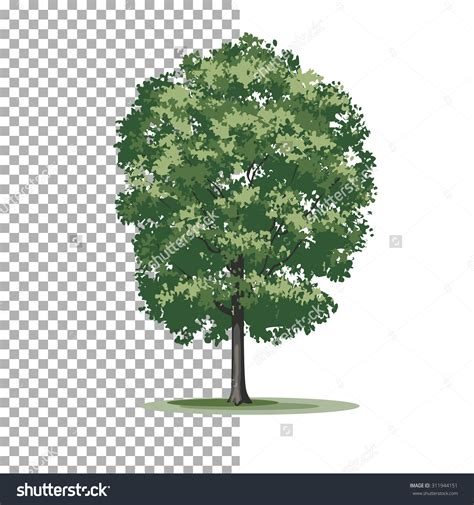 Tree Images No Background by Oak Tree Clipart No Background Collection