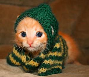 My Top Collection: Cute kitten pics