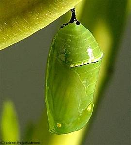 chrysalis | Colors•(♥).••♥•Green #1•♥••.(♥)• | Pinterest ...