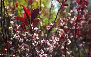 Pflanze Mit Roten Blüten : 18 gartenstr ucher mit roten bl ttern f r sch ne ~ Eleganceandgraceweddings.com Haus und Dekorationen