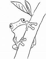 Frog Coloring Tree Frogs Pages Drawing Green Print Printable Printables Drawings Bell Clip Outline Drawn Taco Today Eye Pdf Animals sketch template