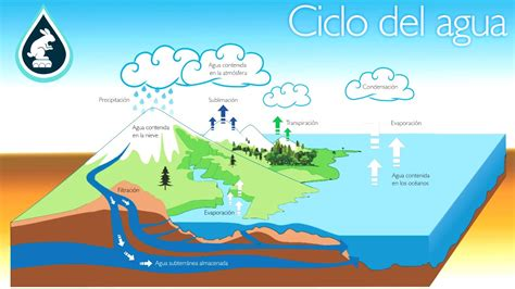El Ciclo Y La Contaminación Del Agua Youtube