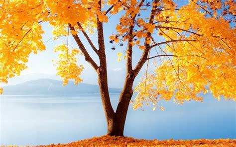 Beautiful Tree Wallpaper For Desktop by 30 Outstanding Desktop Wallpapers For You