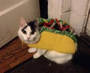 taco cat an palindrome hfboards
