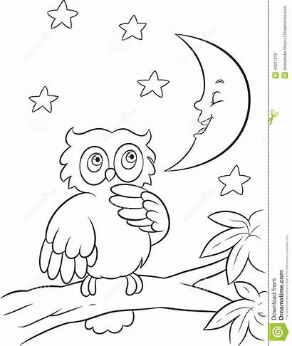 Coloring Night Owl Pages Branch Vector Animals