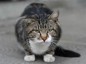 Tabby Cat Personality and Behavior - LOYFLY