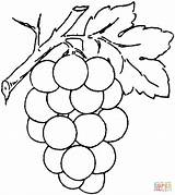 Coloring Grape Pages Printable Drawing Paper Supercoloring sketch template